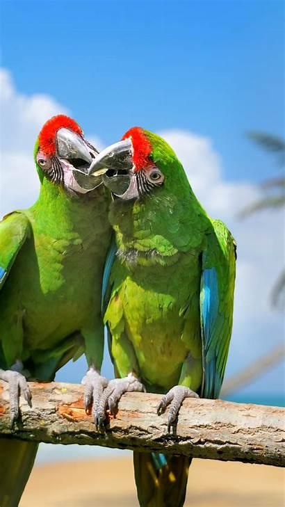 Exotic Birds Parrot Plumage Branch 4k Animals
