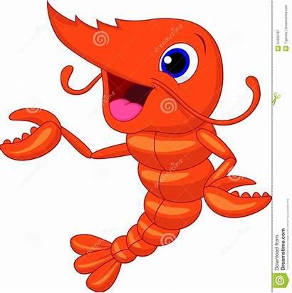 Shrimp Cartoon Vector Presenting Clipart Cooked Lobster