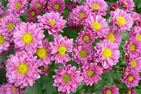 Winterharte Balkonpflanzen Für Kästen by Efeu Im Blumenkasten Blumen Arrangement Im Blumenkasten