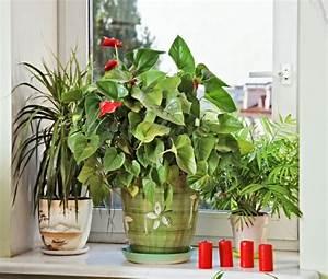Pflegeleichte Zimmerpflanzen Mit Blüten : zimmerpflanzen pflegeleicht und auch f r anf nger geeignet 40 bilder ~ Eleganceandgraceweddings.com Haus und Dekorationen