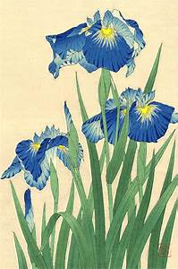 Japanese art Flowers floral plants botanical art prints