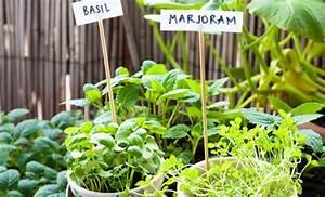 Orto sul balcone: 10 verdure e piante aromatiche che non possono mancare LEITV