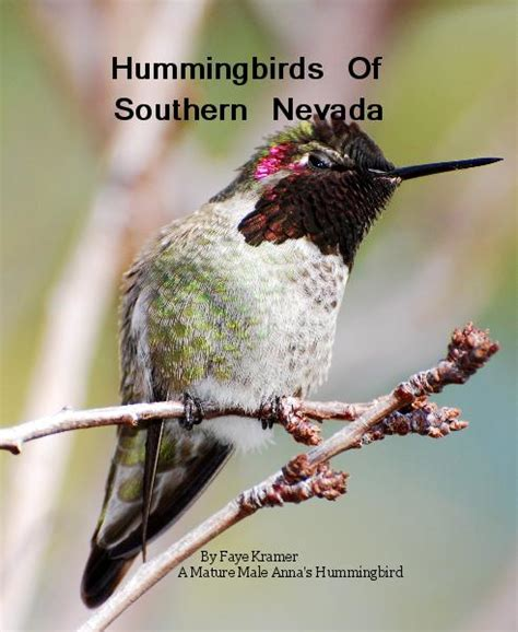 hummingbirds  southern nevada  faye kramer  mature