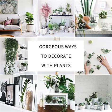 how to decorate interior of home how to decorate your interior with green indoor plants and
