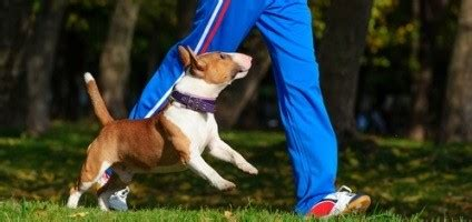 8 Ways Having a Dog Can Get -- and Keep -- You Fit