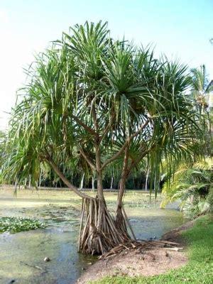 Pandtectorius Useful Tropical Plants