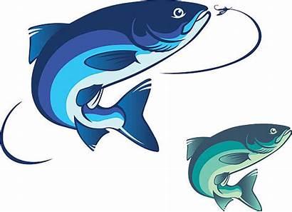 Salmon Vector Fishing Fly Fish Illustration Illustrations