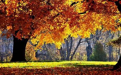 Autumn Scenery Wallpapers Backgrounds Fall Desktop Scenes