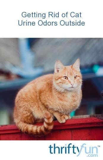rid  cat urine odors  thriftyfun