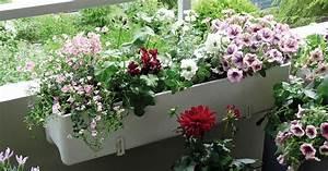 Balkonkästen Winterhart Bepflanzen : balkonblumen richtig einpflanzen mein sch ner garten ~ Lizthompson.info Haus und Dekorationen