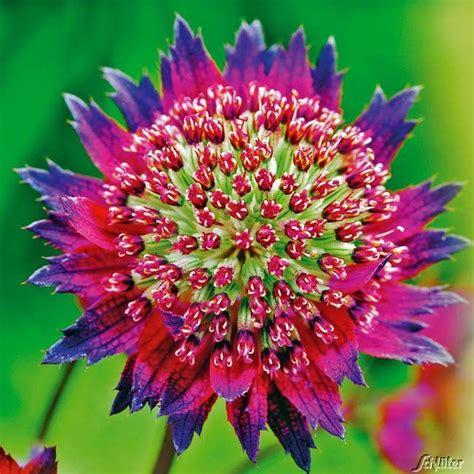 Blumen Für Sonnige Standorte by Blumen Sonniger Standort Stauden F R Den Garten Sonniger