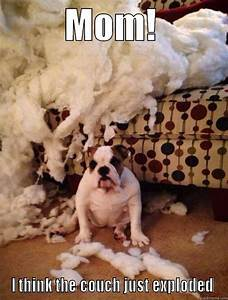I didn't do it! - quickmeme