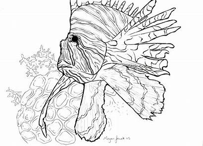 Lionfish Coloring Sketch Library Clipart