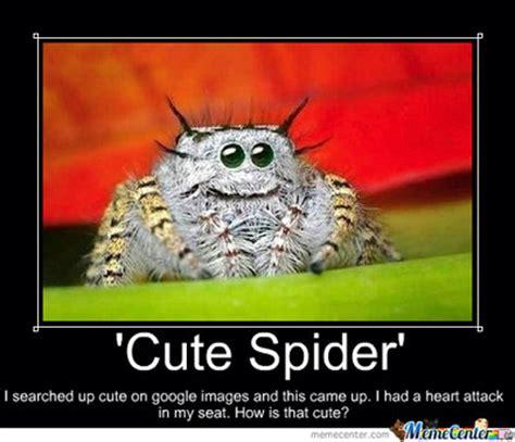 Cute Spider Memes - cute spider by amylovespenguins on deviantart