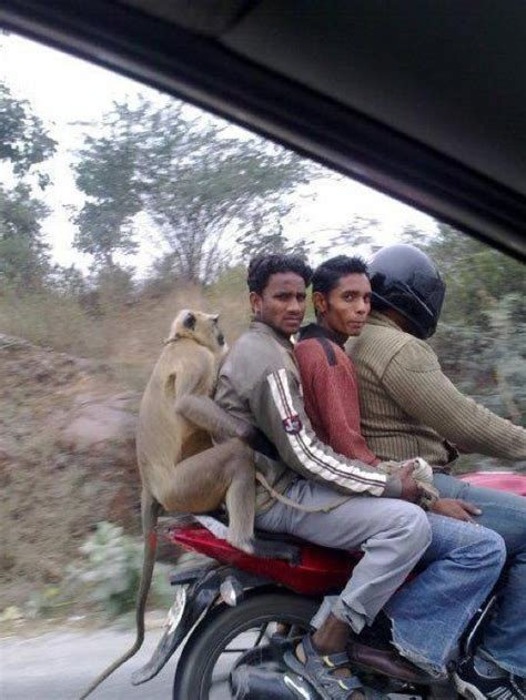 people sitting   motorcycle funny