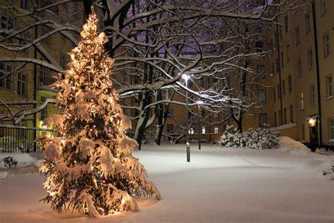 christmas lights snow tree winter image 248309 on favim com