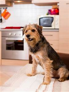 top 7 tips for apartment living with dogs