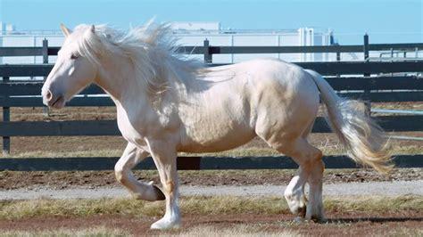 draft horse breeds popular team