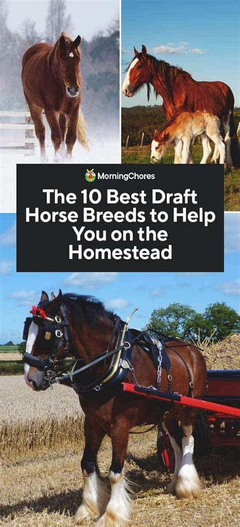 breeds horse