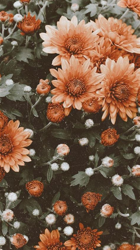 aesthetic floral hd wallpapers wallpaper cave