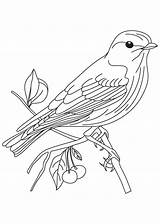 Bluebird Coloring Eastern рисунки Coloringhome источник sketch template