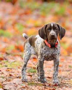 17 best images about welcome to the future on german shorthaired pointer jeep