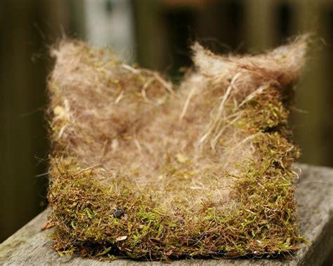 nest  egg identification resources  infinite spider