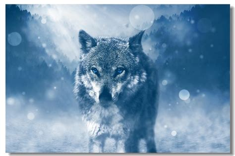 Cool Animal Wallpapers Wolf - cool animal wallpapers wolf www pixshark images