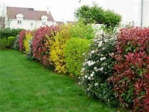 Quels Arbustes Pour Une Haie : les arbustes de haies le jardin du chat ~ Premium-room.com Idées de Décoration