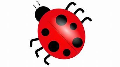 Clipart Ladybug Mariquita Clip Dibujo Domain Una