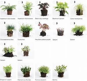 Heimische Pflanzen Für Den Garten : geeignete pflanzen wandbegr nung wandbegr nung ~ Michelbontemps.com Haus und Dekorationen