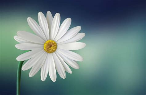Imagen gratis: flora, naturaleza, flor, macro, verano