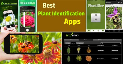 Best Flower Gardening Websites best plant identification apps balcony garden web