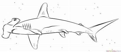 Shark Hammerhead Draw Drawing Step Tutorial Drawings