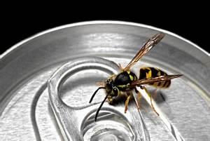 Was Tun Gegen Wespen Im Kirschlorbeer : was tun bei einer wespenstich schwellung schnelle linderung ~ Lizthompson.info Haus und Dekorationen