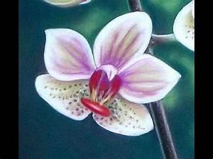 Peindre Au Pastel : roses orchid es tableau au pastel sec by thod youtube ~ Melissatoandfro.com Idées de Décoration