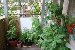 Gemüse Auf Dem Balkon : selbstversorger auf dem balkon eigene kr uter und gem se ~ Lizthompson.info Haus und Dekorationen