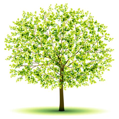 design a tree creative green tree design vector graphics 03 vector plant free download