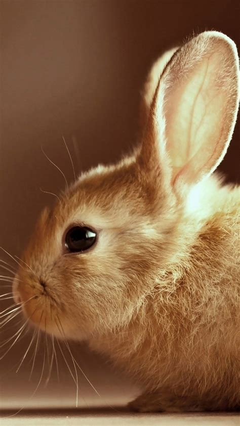 easter rabbit iphone  wallpapers hd