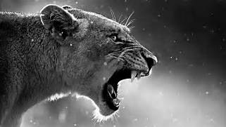 642 lion wallpapers  a...