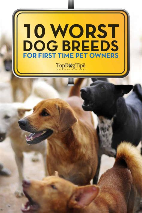 best for owners 10 worst dog breeds for first time owners top dog tips