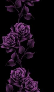 hd wallpapers purple roses