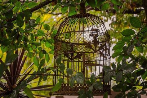 tapety stromy listy zahrada rostliny umelecka dila