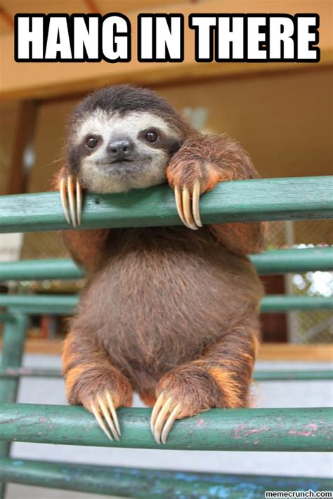 Cute Sloth Meme - sloth furball love pinterest sloth animal and creatures