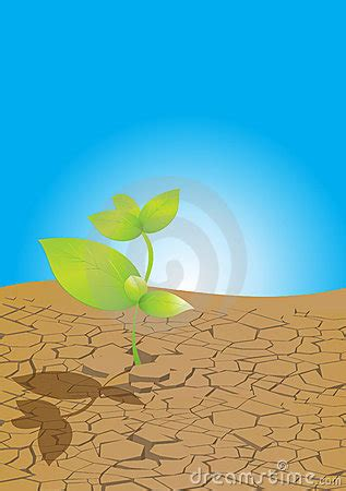 plant  dry ground stock photography image