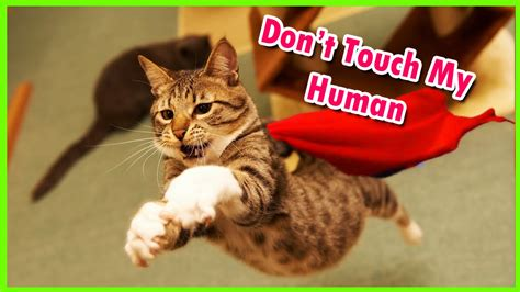 10 Hero Cats Who Saved The Humans They Love! Youtube