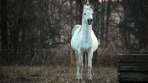 magengeschwuer beim pferd  tun tiergesundde