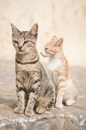 perawatan anjing  kucing