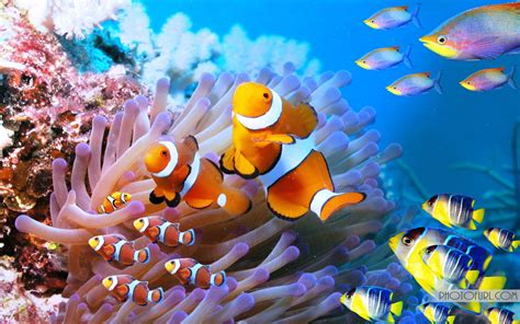 Beautiful Sea Animals Wallpapers - the most beautiful and colorful aquatic sea creatures