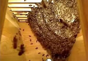 Comment Faire Une Ruche : la vie des abeilles dans une ruche en une minute ~ Melissatoandfro.com Idées de Décoration